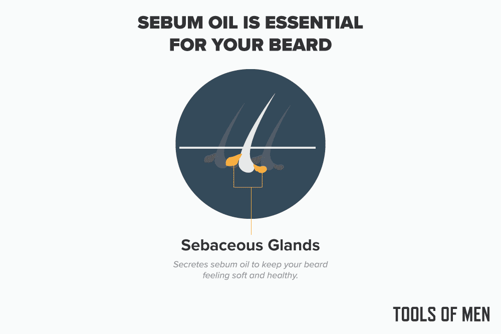 sebum oil is essential for beard growth